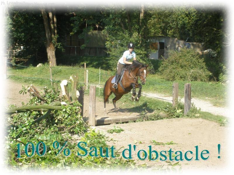 Cheval vasion le saut d 39 obstacle - Frison saut d obstacle ...