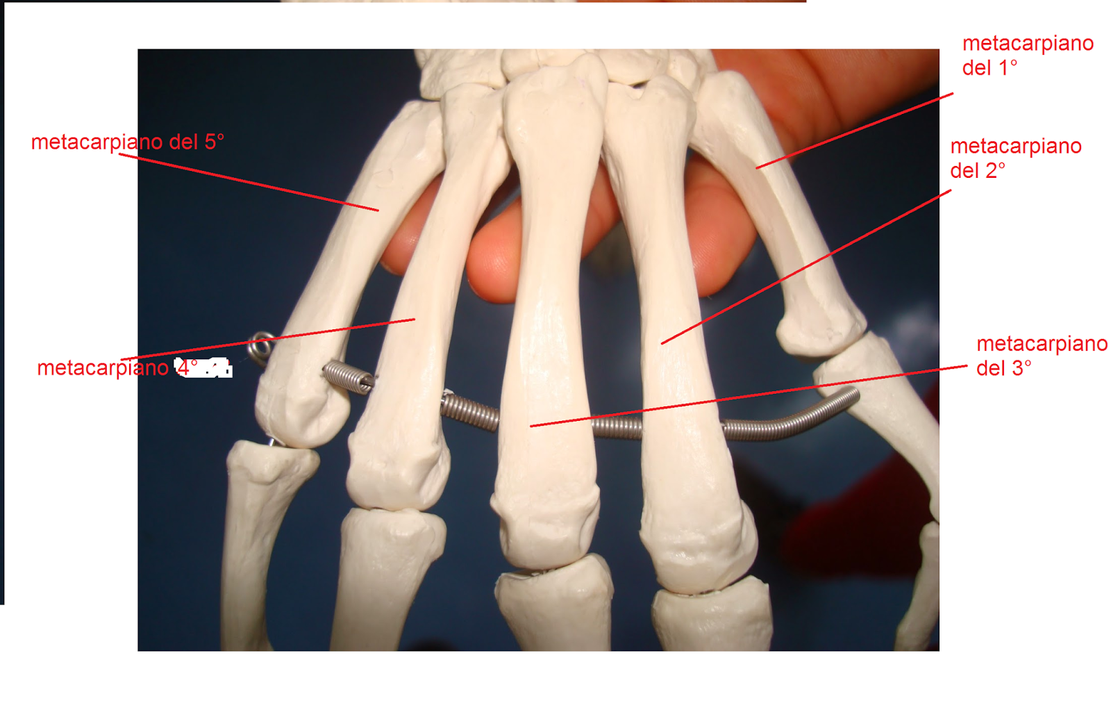 generalidades de anatomia   apredizaje de anatomia de la forma mas ...