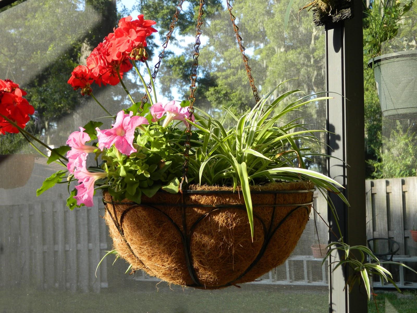 life after empty nest d i y hanging flower baskets. Black Bedroom Furniture Sets. Home Design Ideas