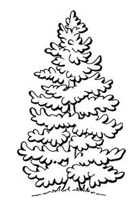 Pine tree for kids coloring
