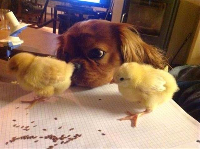 Funny animals of the week - 17 April 2015, best animal photos
