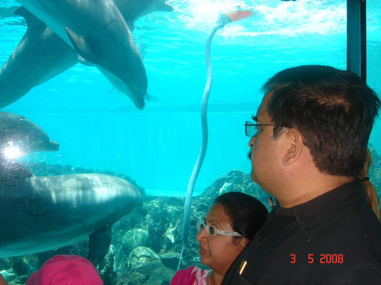 Dolphins at Sea World Orlando