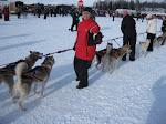 2010 Iditarod Restart