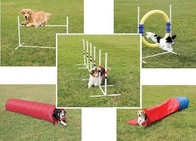 agility-dog-training-classes
