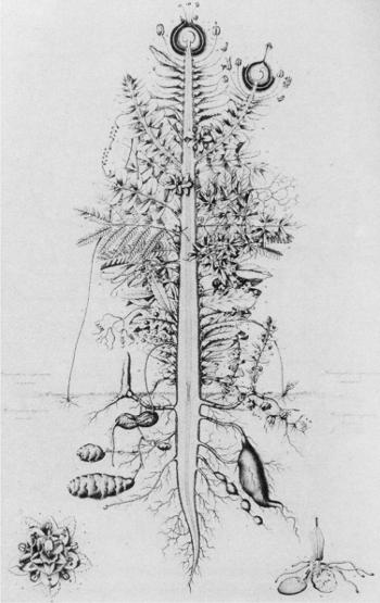 La Metamorfosi delle Piante - Johann W. Goethe