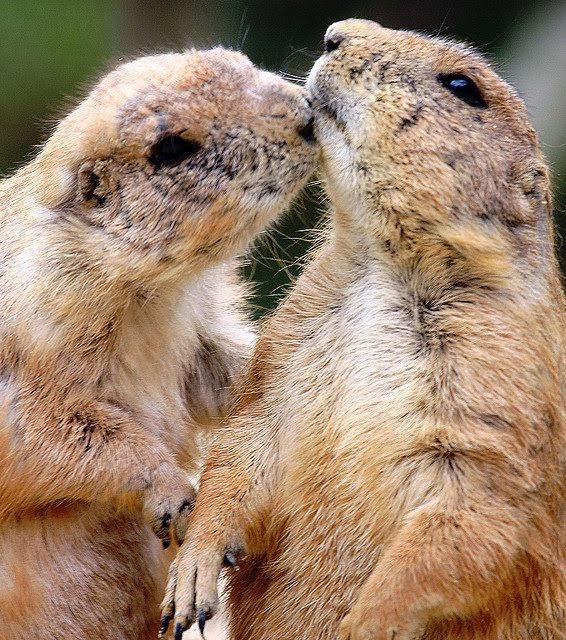 Funny Animals Kissing Photos Images - Funny Animals Kissing