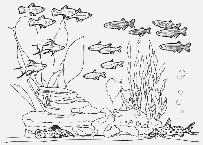 Fish tank coloring pages Free