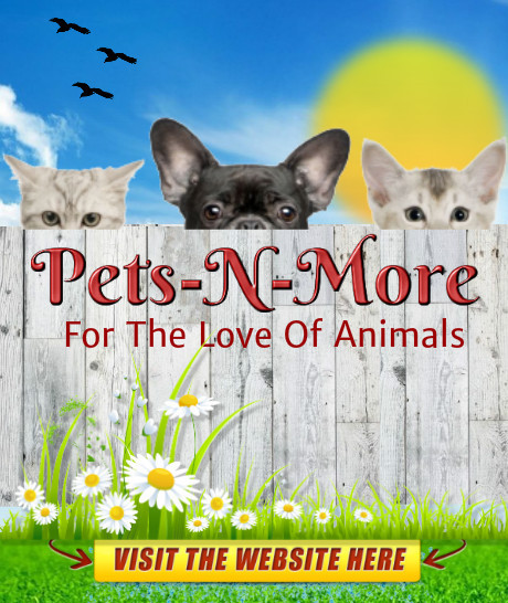 ALL ABOUT OUR FURRY PETS