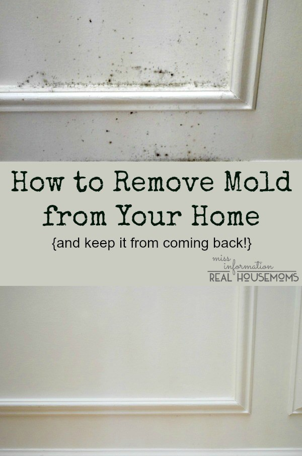 Mold Growth Assessment And Remediation Removing Mold From House House Information Center