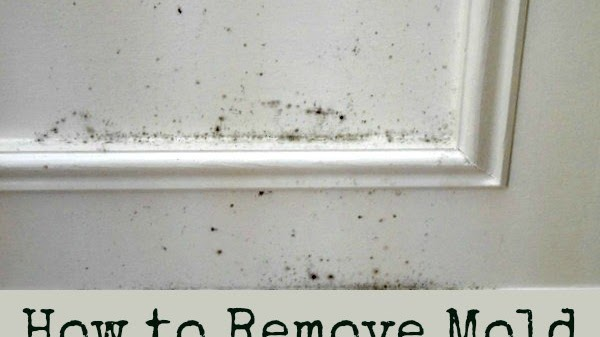 Mold Growth, Assessment, And Remediation - Removing Mold From House