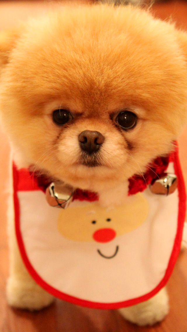Cute Puppy IPhone Wallpaper