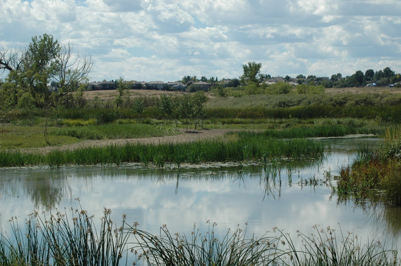Explore Colorado Cherry Creek State Park Bird Watching
