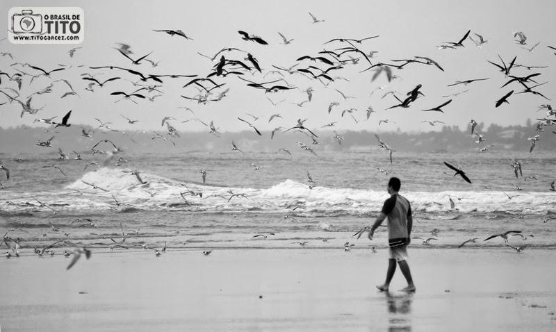 Revoada de aves na praia do Farol (ou da Princesinha), na ilha de Maiandeua (Algodoal), no Pará