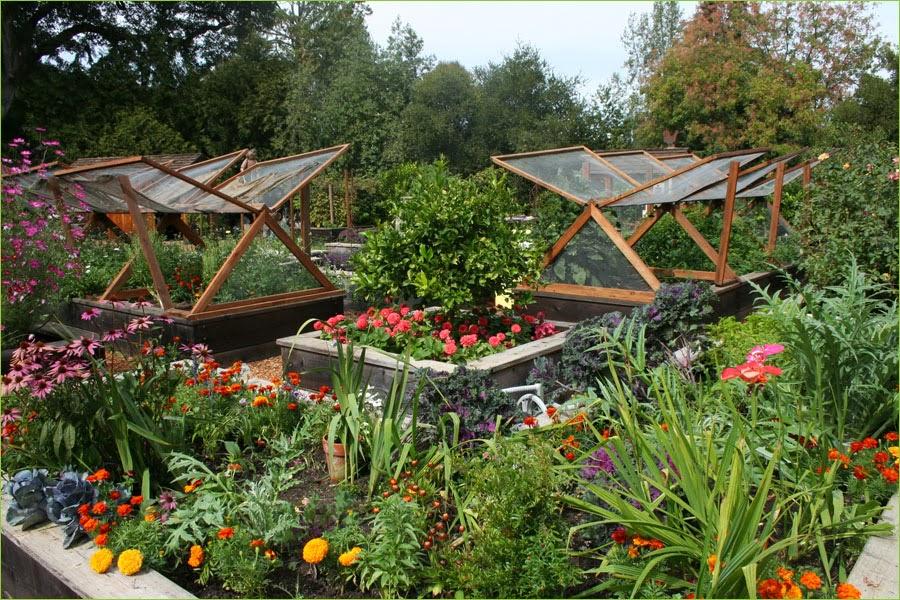 Vegetable Garden Wallpaper Wallpaper Gallery