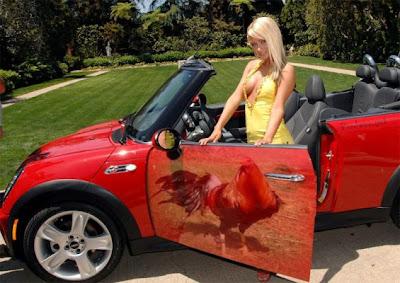 gallo en puerta de auto com mujer