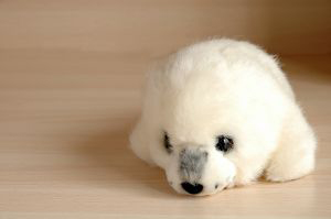 Pictures Of Baby Polar Bear Cubs