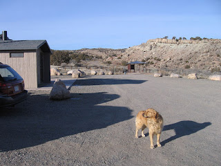 Scout with his nose into the wind at the Devil's Canyon trailhead