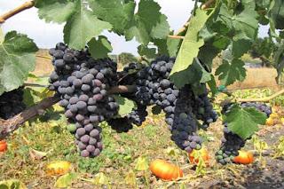 winecountry-tour