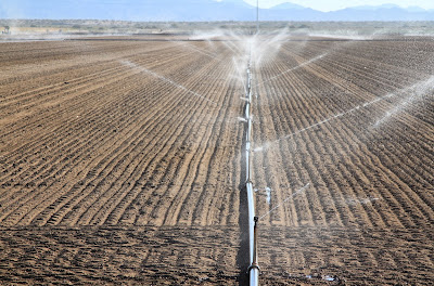 Watering in the Imperial Valley