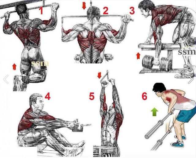 Muscle anatomy workout