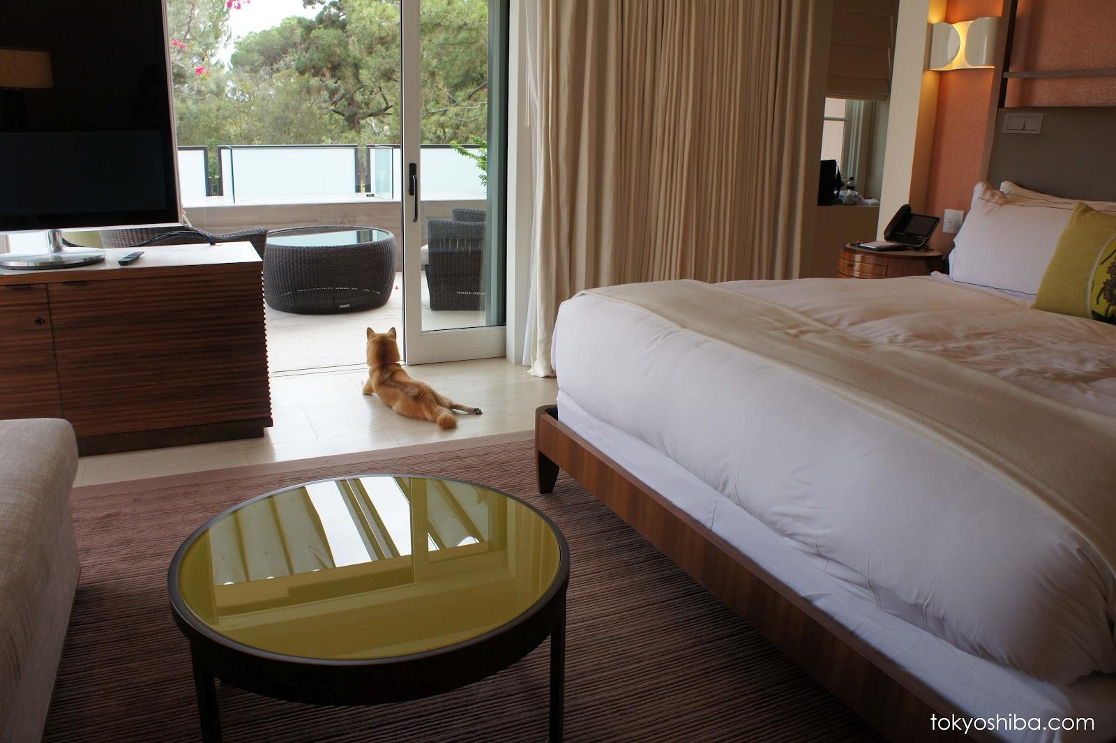 Room Suite Pet Friendly Hotel Beaverton Oregon