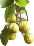 common herbs used in FLp:Garcinia Cambogia