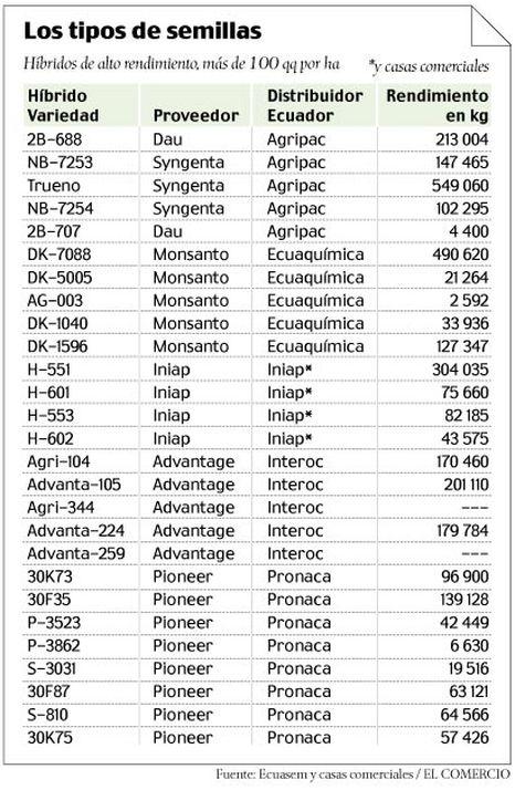 variedades de semillas de maiz: