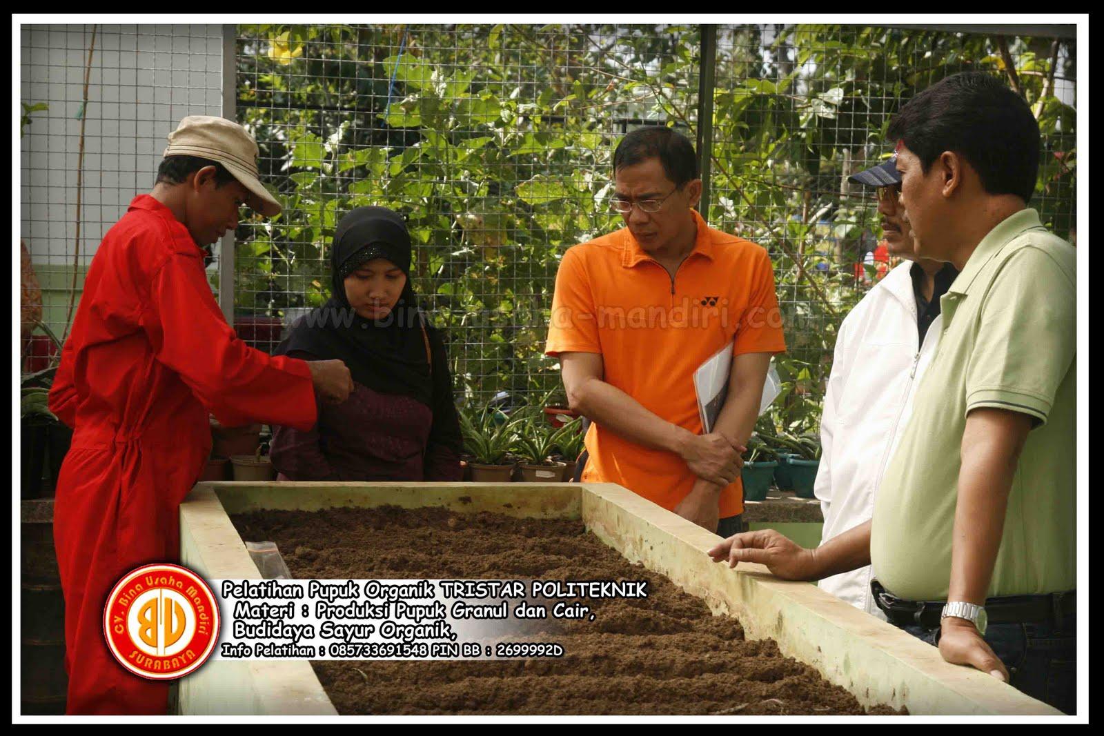 ... Produktif , Ternak Sapi, Kolam Lele & Pembangkit Listrik dari Biogas
