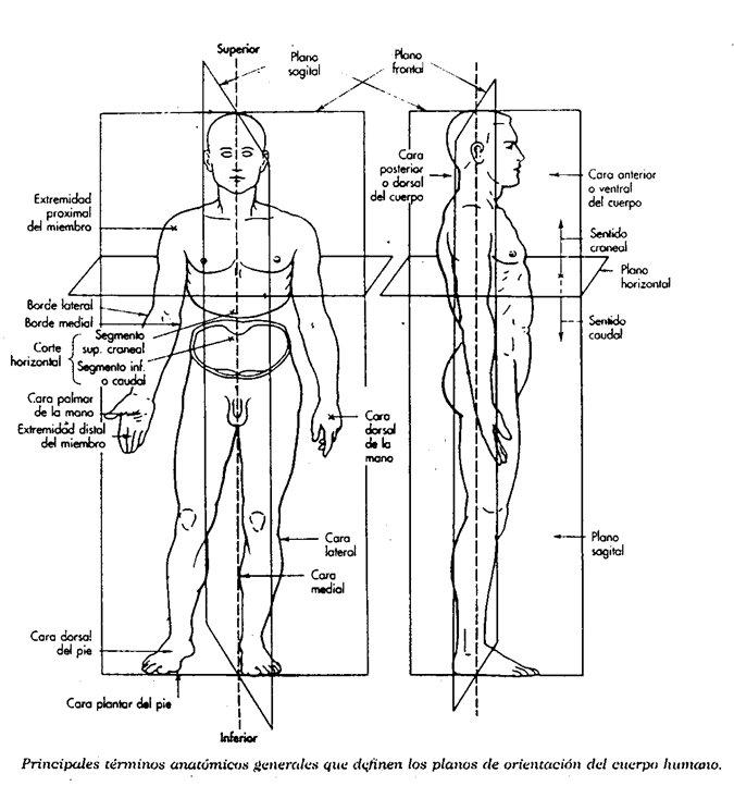 Planimetria.   Celula