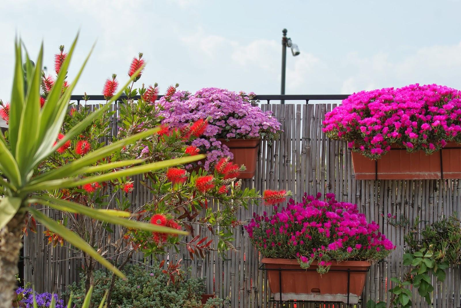 Il Blog di Mati: Una terrazza in fiore
