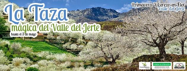 La Taza Mágica del Valle del Jerte. Concurso