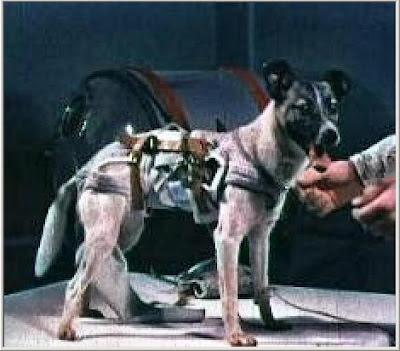 Perros famosos que nunca se han de olvidar 1_Laika_with_space_gear