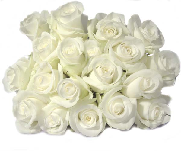 White purity innocence silence secrecy truth reverence humility