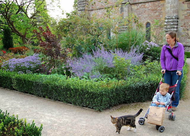 Cat in the Bishop's Palace gardens