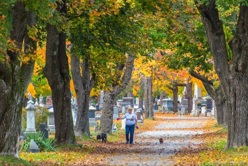 October 2014 Portland, Maine Evergreen Cemetery Foliage dog walker photo by Corey Templeton