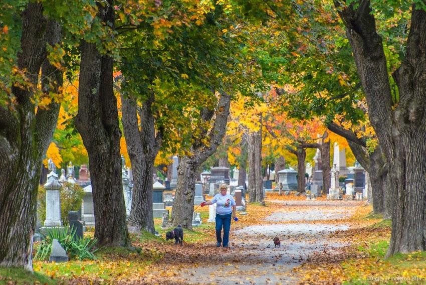 October 2014 Portland, Maine Evergreen Cemetery Foliage dog walker photo by Corey Templeton