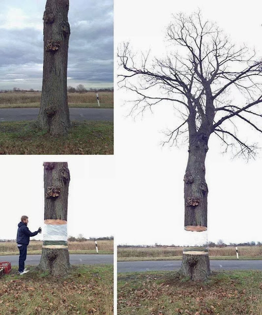 FUNNY CREATIVITY ON A TREE