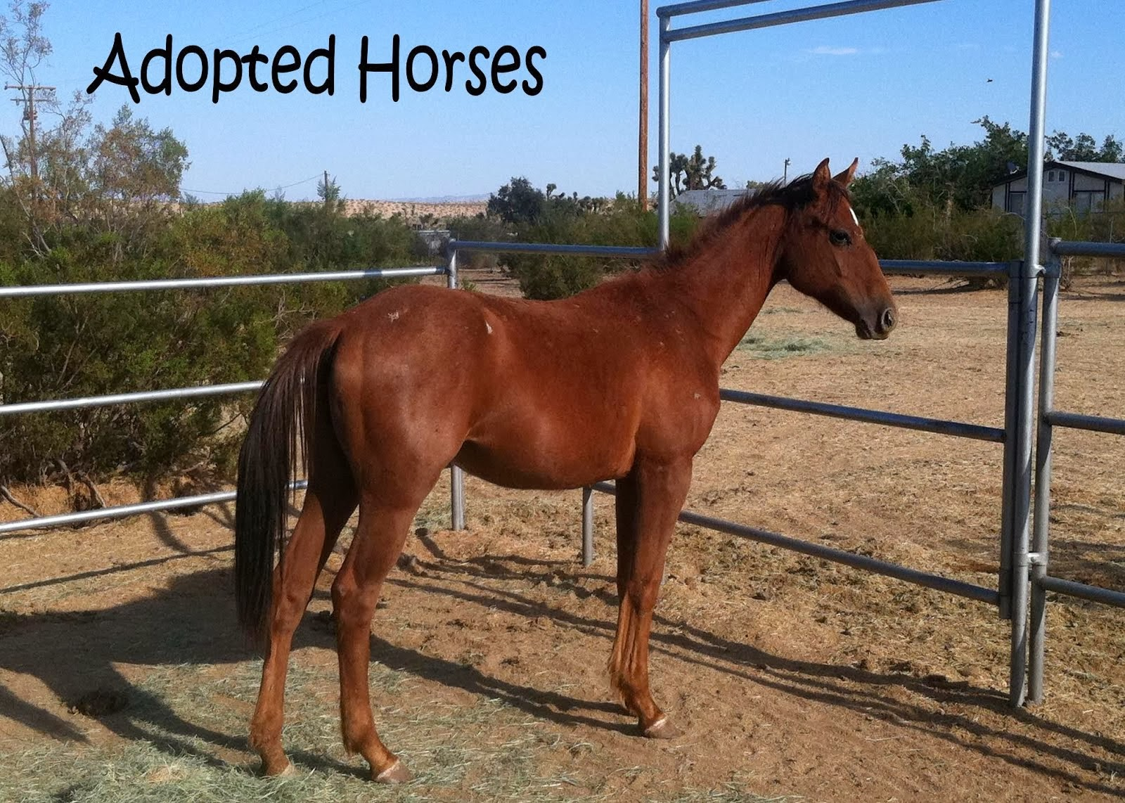 Adopted Horses