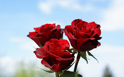 red valentines day roses by cool wallpapers at cool wallpapers and wallpaper