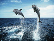 Tapety: DelfinyOrkiDolphins Wallpapers . (tapeta delfin orka )