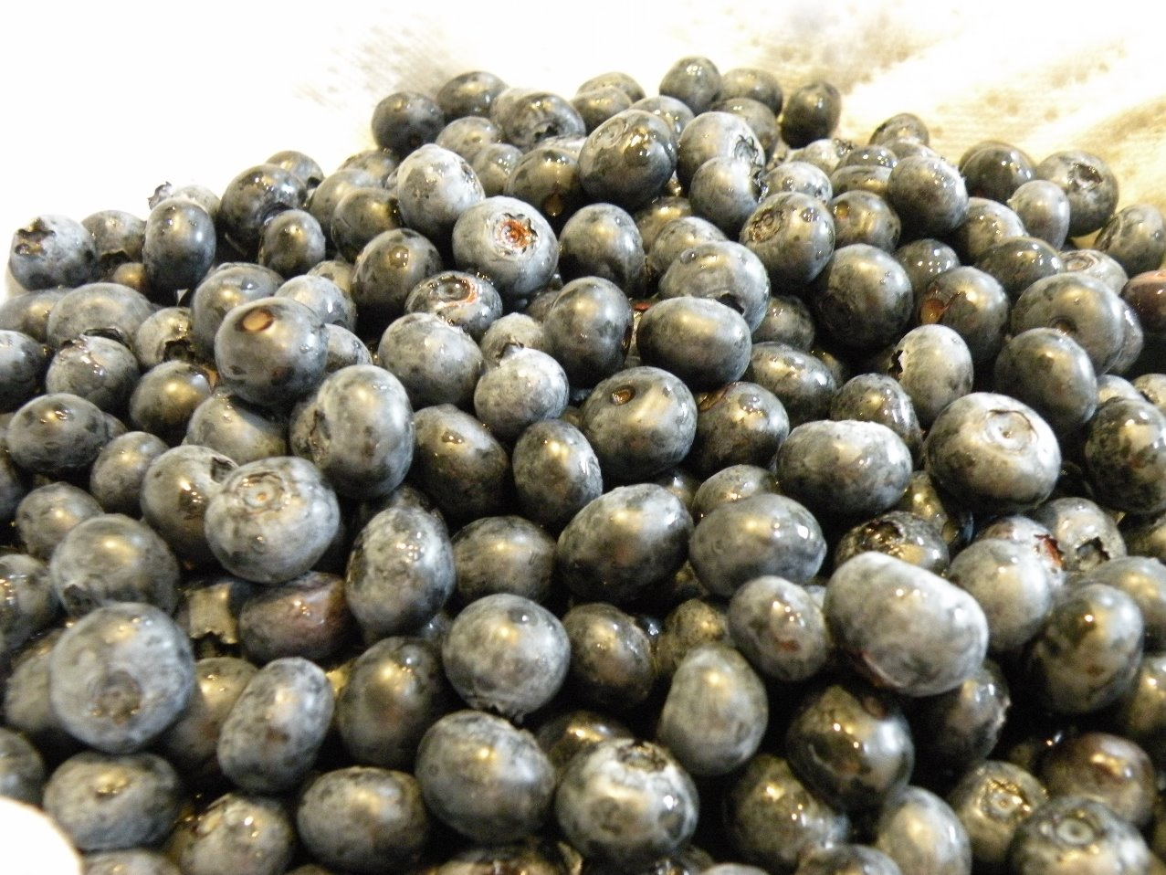 bunch of picked blueberries