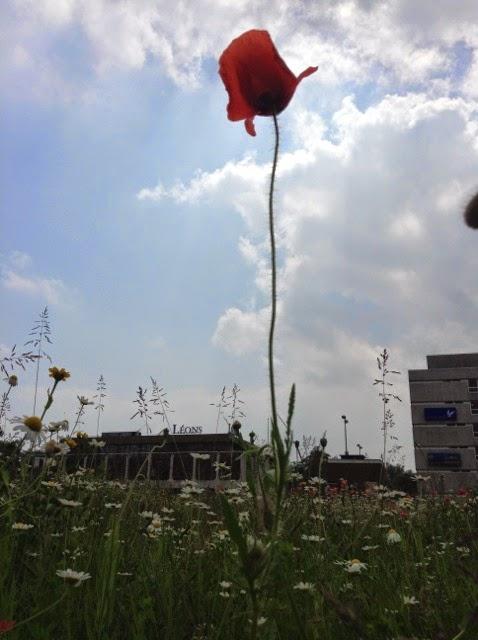 unedited poppy