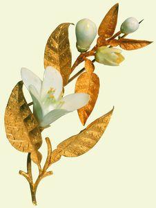 Vintage Orange Blossom