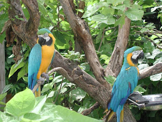 Macaw Parrots Wallpapers