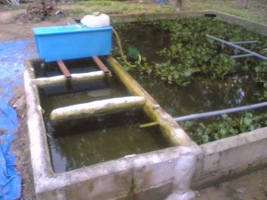kolam ternakan LAT