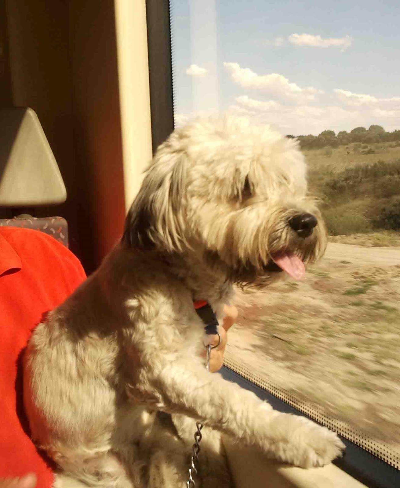 Perro pis almohadilla tren