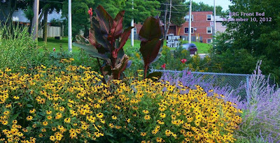 Late-blooming Black-eyed Susans add splash of deep golden yellow to BRG Lakeshore flower bed.
