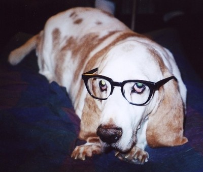 dog with glasses, dogs wear glasses, dogs and glasses, cute dog pictures