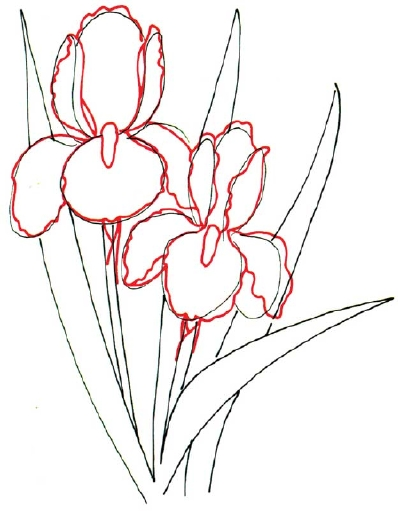 Wedding Flower Line Drawing : Cartoon pictures how to draw an iris in steps
