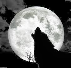 http://strangesounds.org/2013/05/wolf-song-listen-to-30-wolves-howling-in-unison-in-a-wolf-sanctuary-in-indiana-usa.html